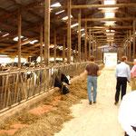 2008 - Unternehmerreise nach Deutschland – Tierhaltung