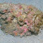 Steenvissen