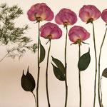 Rosas moradas y esparraguera. Sembradito 75x45cm.
