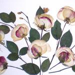 Rosas en abanico