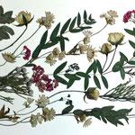 Falsa pimienta, rositas, astrantias, brunias y eucalipto. Apaisado 78x30cm.