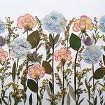 Solidago, rosas filo y fucsias, hortensias. Sembradito 75x40cm.