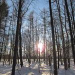 立ち木と夕陽