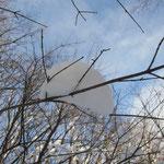 枝に綿菓子