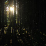 der Wald und seine Schatten