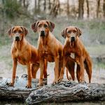 Abby, Jala, Nayla (v.l.)