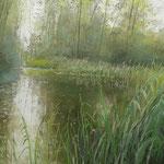 Altwasser, Schilf, 2013, 30 cm x 75 cm