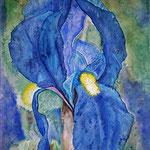 Schwertlilie (Aquarell)