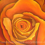"""""""Rose orange"""", 80 cm x 100 cm, Bild in Privatbesitz"""