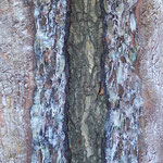 """""""Rindenvariationen"""", 40 cm x 125 cm, Acryl, Spachtelmasse, Lehm, Rost auf Holzkörper (in Privatbesitz)"""