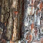 """Ausschnitt """"Strukturen-Waldimpressionen"""""""
