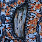 """Kieferinde 3"", 60 cm x 80 cm, Acryl, Spachtelmasse, Marmormehl (in Privatbesitz)"