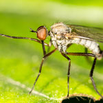 Malaria in Kambodscha