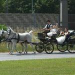 Hochzeitfahrt Richtung Gasthaus Fischerwirt / Gradwein