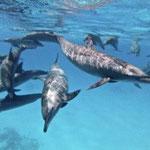 Delfin Reisen, Yolanda Hochstrassen, Ägypten Reisen, Safari Reisen