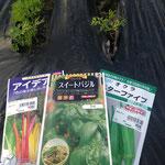 2014年 人参は芽が出た!春蒔き用のスイスチャード(西洋ふだん草)、オクラ、バジルをGO!!(4月下旬)