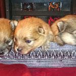 2 недельки малышам - слева направо: Тоша, Нюточка, Мелечка