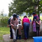 女性陣は野菜の準備