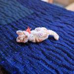 ・ごろりん猫ブローチ 6cm ごきげんごろりん猫。 おててペロペロ、よい気分。