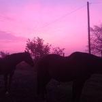 Der Himmel strahlt für die Pferde - was für ein Sonnenaufgang