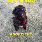 Rada/Lemmy