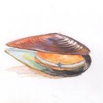 ムール貝の調べ