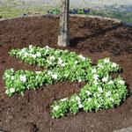 28.04.2007 - erste Neubepflanzung - die Friedenstaube als Symbol war seit dem immer mit dabei