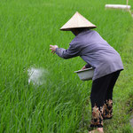 woman in ricefield