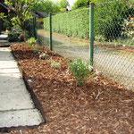 Neupflanzung Ginster (100cm) und Rhododendron (50-60cm)