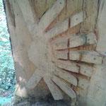 Pilgermuschel aus Holz