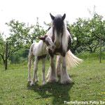 Candy und Derry, ein großes Fohlen 05.05.2003