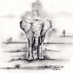 Elefantenstudie - 20x20cm, Bleistift auf Doreé 180g, 2013