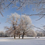 Kurpark - Winterimpression 1