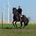 Glamorgan Damien, Stempelhengst der Glenmorgan Farm mit Besitzerin und Reiterin S.Fischer-Henkel
