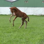 Glenmorgan Just Amazing: leichte Vorhand , Kraft und Balance
