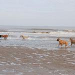 Mit der Hundeschule in De Haan 12.-14. Juni 2009