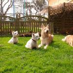 Mit Mon,  Ivy, Rockie und Dizzy 2009