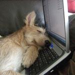 Während dem  Mailen eingeschlafen