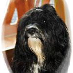 das ist unser Wachhund Milow :-)