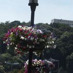 Bismarckbrücke mit Blumengirlanden an Laternen