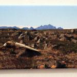 Silber 925, verwittertes Holz aus Island, Leinwand