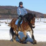 Schwere Pferde fein geritten