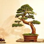 Studio Botanico - Gaggiano MI