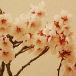 Prunus Mume (Albicocco giapponese) di Enrico Colli