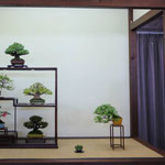 Brianza Bonsai - III° classificato ex-aequo