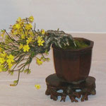 Gelsomino (Jasminum nudiflorum) di Beppe Giovanelli
