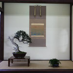 Bonsai Club Martesana