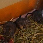 Tobias, Toto, Finn, Raven, Pinsel