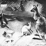 Завтрак у кенгуру. 1985.ч.б. пастель. 50х49. Лист № 4.