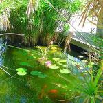 Entspannung am Teich...